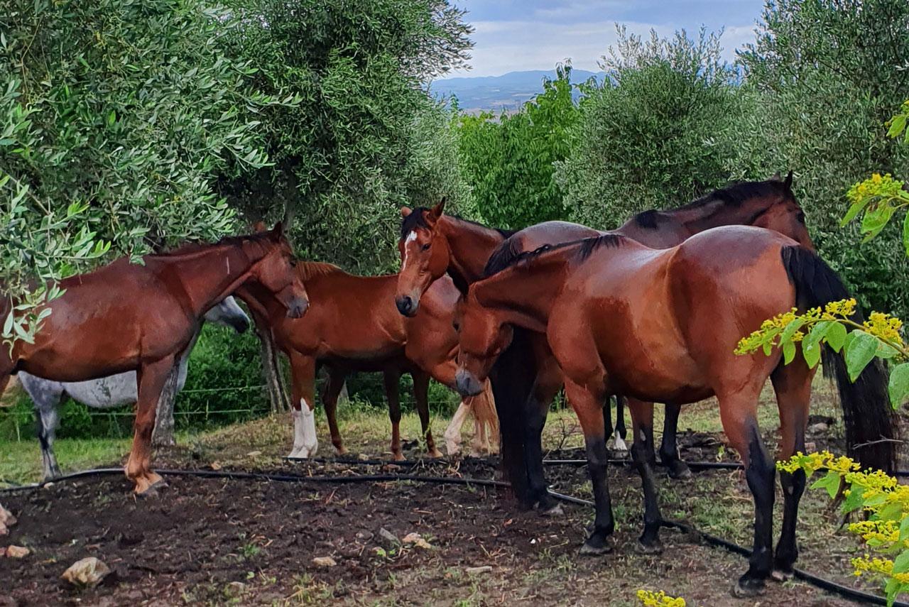 https://www.terreneremontalcino.it/wp-content/uploads/2020/12/zoo-messa-in-sella.jpg